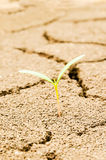 Plant on drought field Stock Photo