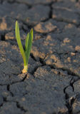 Plant drought Stock Photography