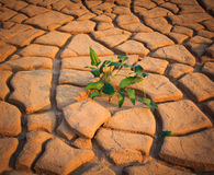 Plant on dry soil background Royalty Free Stock Images