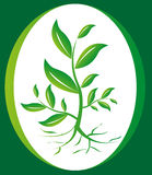 Plant Eco Friendly Icon, Logo. Vector illustration of a plant that can use as a logo or a icon on white and green background Royalty Free Stock Photos