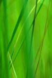 Plant eco green background Stock Photo