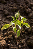 Plant ecology concept Stock Images