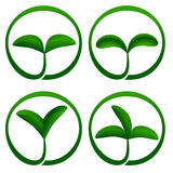 Plant ecology icon Stock Images