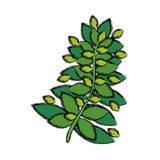 Plant ecology isolated Royalty Free Stock Photos