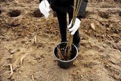 Plant een Boom Stock Foto's