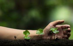 Plant een boom, bescherm de boom, Handhulp de boom, Groeiende stap, die een boom, zorgboom, aardachtergrond water geven stock afbeeldingen