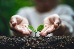 Plant een boom, Oude hand die de kleine boom van de bomenkoffie water geven stock foto's