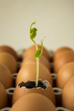 Plant in egg Stock Images