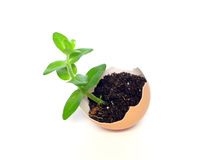 Plant in the egg Royalty Free Stock Photography