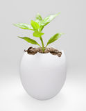 Plant in a egg shell Royalty Free Stock Photography