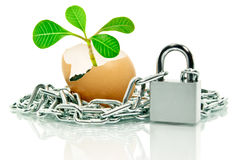 The plant in the egg shell apart,wound chain and padlock Royalty Free Stock Image