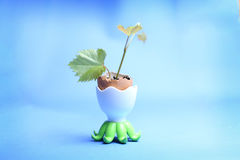 Plant in an egg shell Stock Image