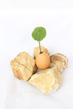 Plant in egg surround with rocks. On white background Royalty Free Stock Photos