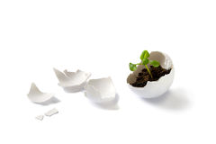 Plant in eggshell. A conceptual image of a new born life. A broken eggshell with a small green young plant inside royalty free stock photos