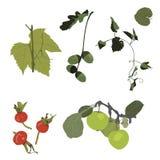 Plant elements Stock Image