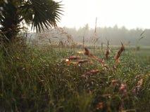 plant& eliminante x27 della neve di stagione invernale; s durante l'alba immagine stock