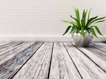 Plant in the empty rom. A green plant in the empty rom Royalty Free Stock Photos