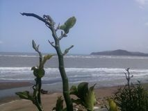 Plant enjoying sea view. Plant looks bigger than the mountain on backside Royalty Free Stock Image