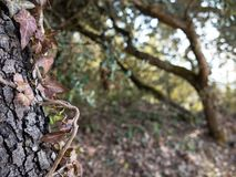 Plant entangled in tree, mysterious and beautiful royalty free stock images