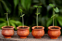 Plant evolution -New life. New life - Plant growth, Stages of plant progression stock photography