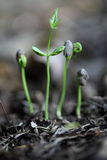 Plant evolution -New life Royalty Free Stock Photo
