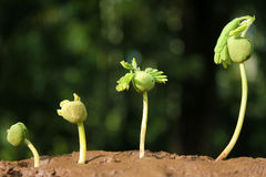 Plant evolution -New life Stock Photos