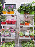 Plant exhibitors. Exhibitors of plants with prices in euros Stock Images