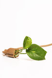 Plant in extension cord. Isolated plant growing out of an extension cord Royalty Free Stock Image