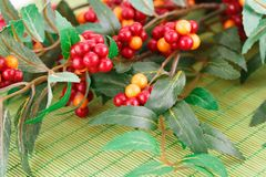 Plant. Fabric plant with berries on bamboo background Stock Photos