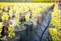 Plant Farm Royalty Free Stock Photo