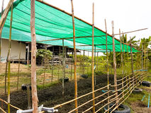 The plant farm from bamboo with green mesh on top. In the garden Stock Photography