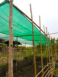 The plant farm from bamboo with green mesh on top. In the garden Stock Image