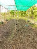 The plant farm from bamboo with green mesh on top. In the garden Stock Photos