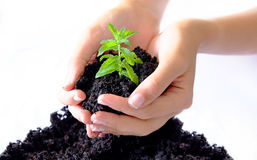 Plant Farming. Hands growing and taking care for a young plant Royalty Free Stock Image