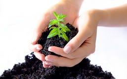Plant Farming Royalty Free Stock Image