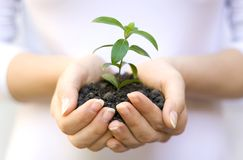 Plant in female hands Stock Images