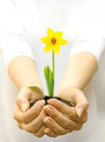 Plant in female hands Stock Photography