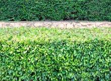 Plant fence Stock Image