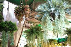 Plant fern hang from roof stock photo