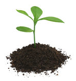 Plant in fertile soil Royalty Free Stock Images