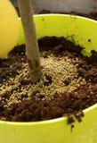 Plant fertilizer Stock Image