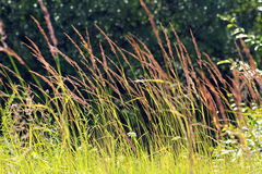 Plant fields. Plant fields near the forest in Sunny warm weather in the wind stock photography