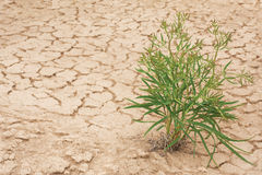 Plant fighting with drought Stock Photo