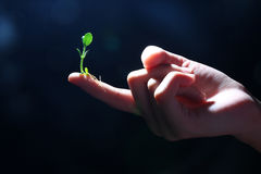 Fragile life - Series 2. Plant on finger demonstrating fragility of life Royalty Free Stock Photos