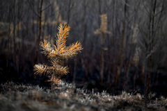 Plant after fire Stock Photos