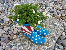 Plant in flag boots Royalty Free Stock Photography