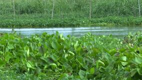 Plant floating in canal