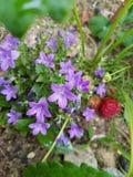 Plant, Flora, Flower, Flowering Plant