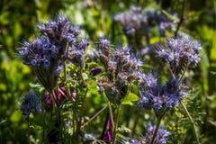 Plant, Flora, Flower, Grass stock photo