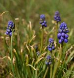 Plant, Flora, Flower, Grass royalty free stock photography